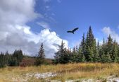 Soaring eagle with scenery — Stok fotoğraf