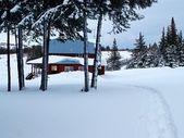 Homestead Alaski przez drzewa — Zdjęcie stockowe