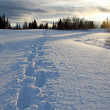 Snow shoe track at sunset — Stock Photo