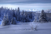 Alaskan landscape in winter — Stockfoto