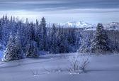 Alaskan landscape in winter — Stock Photo