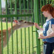 A girl feeding a deer in the zoo - Stock Photo