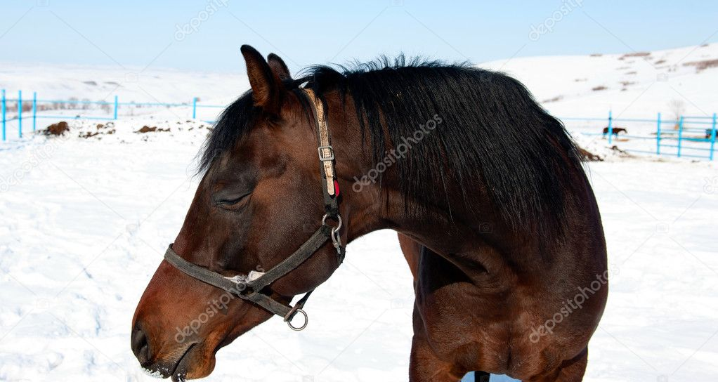 Portrait of a horse against the steppe — Stock Photo #9271813