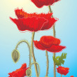 Poppies - Stockfoto