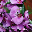 Bridal bouquet of orchids - Stock Photo