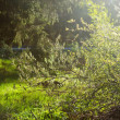 Sunbeam in green forest — Stock Photo