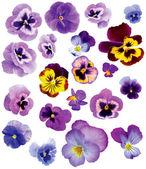Set of flowers — Stock Photo