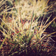 Grass Abstract paper background,Vintage style — Stock Photo