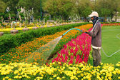 Florist man working with flowers at a greenhouse. — Stock Photo