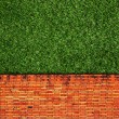 Wall Background on green grass — Stock Photo #8228888