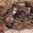 Stock Photo: Close up of soil background