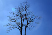 Abstract background branch on blue sky — Stock Photo