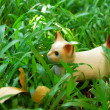 Ceramic cat in the grass — Stock Photo #9304758