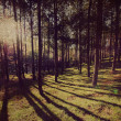Forest background ,Vintage style - Stock Photo