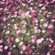 Flowers background Vintage — Stock Photo
