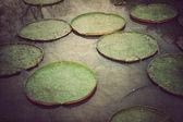 Zielony lotos liści, styl vintage — Zdjęcie stockowe
