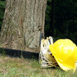 Stock Photo: Forestry Still-Life
