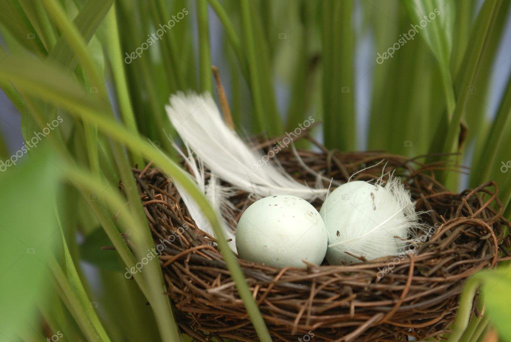 A macro shot of a bird's nest in some foliage. — Stock Photo #8101843