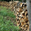 Stockpile of Firewood — Stock Photo