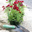 Flowers to Plant — Stock Photo #8593480