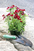 Flowers to Plant — Stock Photo