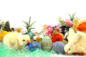 Easter Chicks — Stockfoto