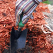 Stock Photo: Gardener Prepares Soil