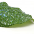 Leaf with Waterdrops — Stock Photo