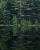 Wooded Reflections — Stock Photo