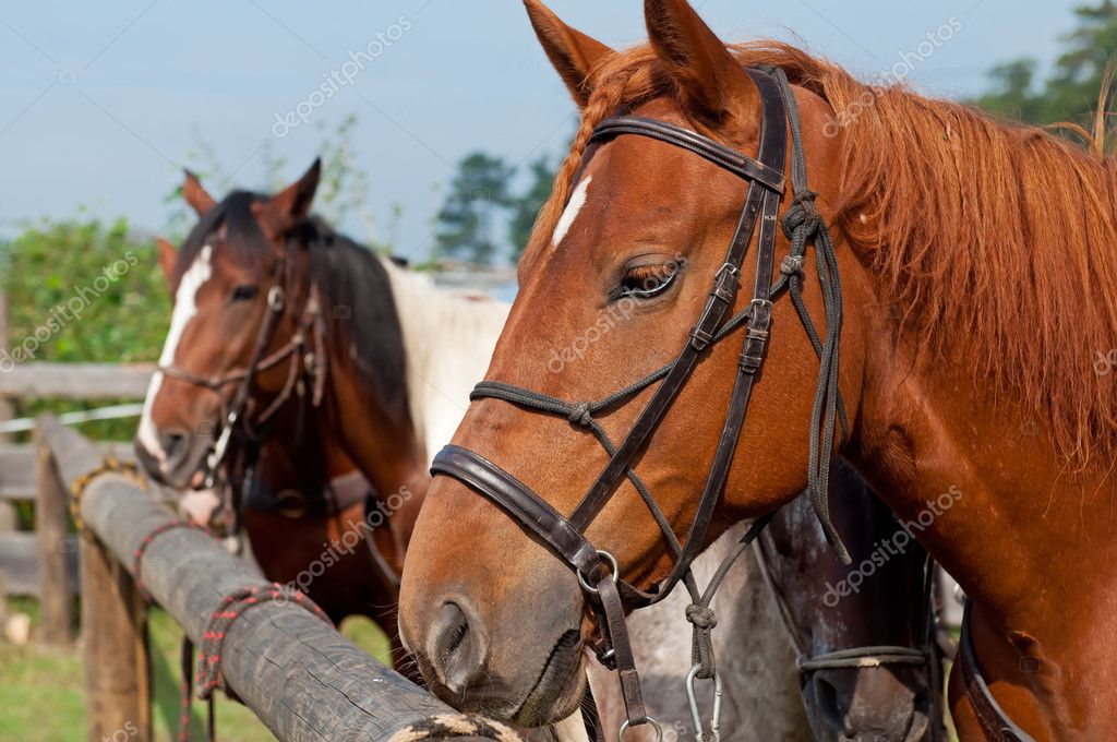 Beautiful horses, picture taken during the daytime.  Stock Photo #8083494