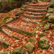 Old Steps in a Forest - Stock Photo