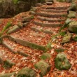 Old Steps in a Forest - Photo
