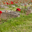 Cemetery in Terezin — Stock Photo #8371240