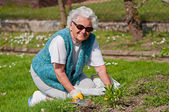 Senior donna in giardino — Foto Stock