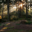 Stock Photo: Sunbeams in Forest
