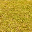 Grass green — Stockfoto #10099125