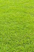 草坪纹理 — 图库照片