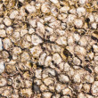Shell rock solid background texture — Stock Photo