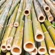 Bamboo was cut — Stock Photo