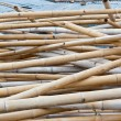 The dried bamboo — Stock Photo