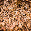 Stock Photo: Leaves brown