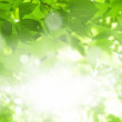 Green leaves, bright sun — Stock Photo #9520154