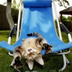 Cat yawns — Stock Photo #9468176
