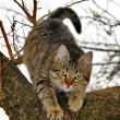 Cat on tree — Stock Photo #9468187
