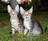Cats sitting — Stock Photo