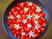 Bowl of flower — Stock Photo