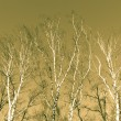 Winter trees background — Foto Stock