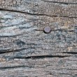 Wooden texture with rusty nail — Stock Photo