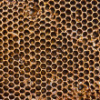 Closeup of honey comb on a sunny day — Stock Photo #8198352