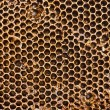 Closeup of honey comb on a sunny day — Stock Photo